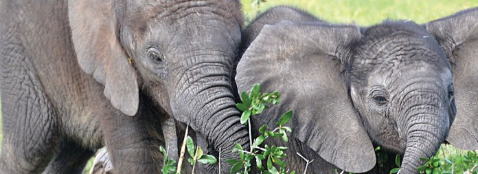 15 tampas lowry park zoo2