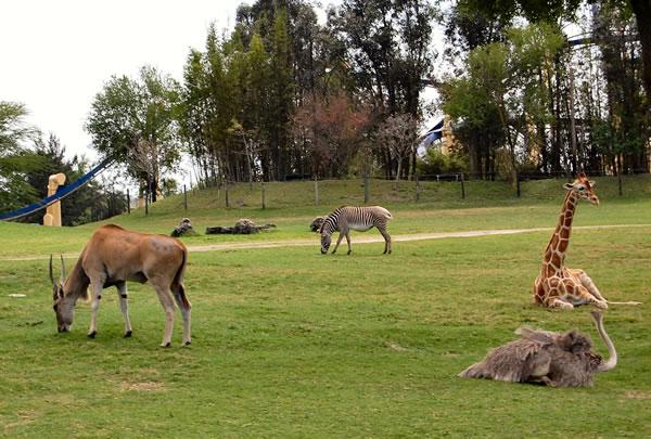Antelope_Ostrich_Others_Busch_Gardens_2008_fs