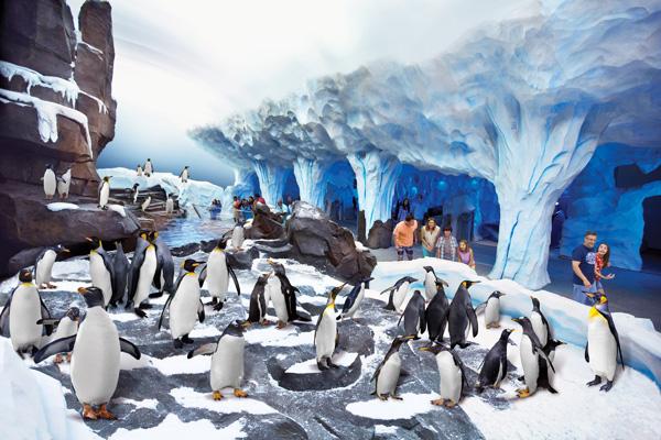 Penguin-habitat