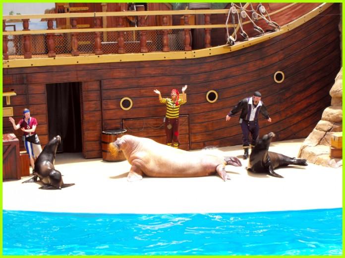 The-Sea-Lion-and-Otter-Stadium-seaworld