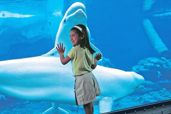 beluga-aquarium-girl.cr2211x1473-0x141.800x (1)