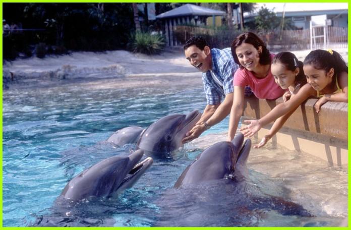 dolphin-cove-seaworld
