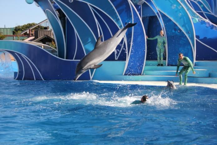 dolphin-sea