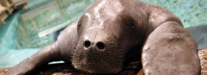 Attractions - South Florida Museum Manatee