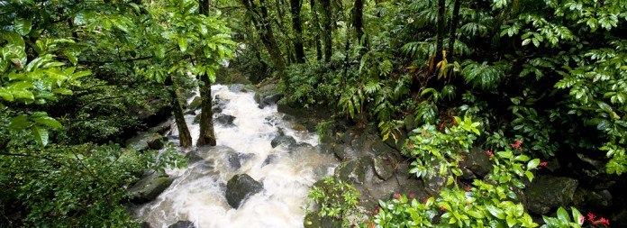 El Yunque National Forest, Commonwealth of Puerto Rico, United States Territory